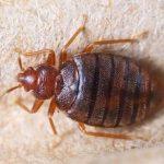 Pest Control Cape Town